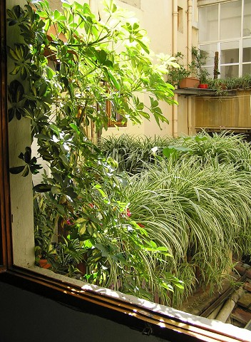 plants from the window